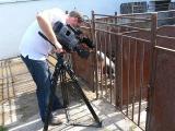2011.07.14. - Harsányban forgatott a Hír TV stábja